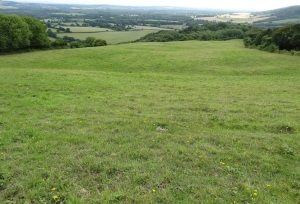 The Access Land area of Bepton Down as viewed from the cattle trough after topping.
