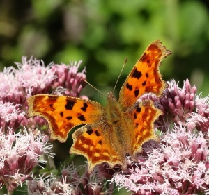 Comma on Bepton Down